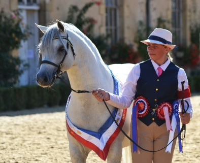 Adagio - French National Welsh Show 2015