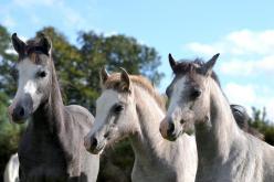 Foals 2014