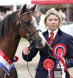 Coppelia de l'Aurore Supreme champion French National Welsh Show 2014 - photo Rose May Harang