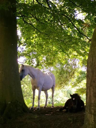 Etincelle Ravignan & foal - 2015