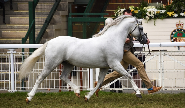 Adagio - Royal Welsh Show 2015